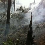 Tin tức Sony - Cháy rừng thông, 2 người nhập viện cấp cứu