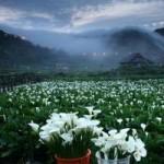 """Du lịch - Đài Loan: Đẹp """"rụng rời"""" thiên nhiên Dương Minh Sơn"""