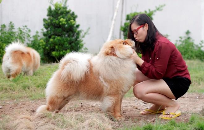 Cô gái Việt có trại chó giá ngàn đô/con - 4