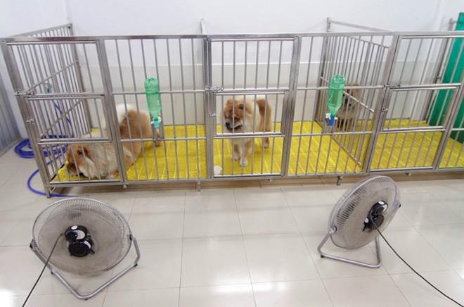 Cô gái Việt có trại chó giá ngàn đô/con - 5