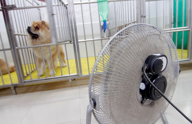 Cô gái Việt có trại chó giá ngàn đô/con - 6