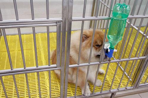 Cô gái Việt có trại chó giá ngàn đô/con - 7