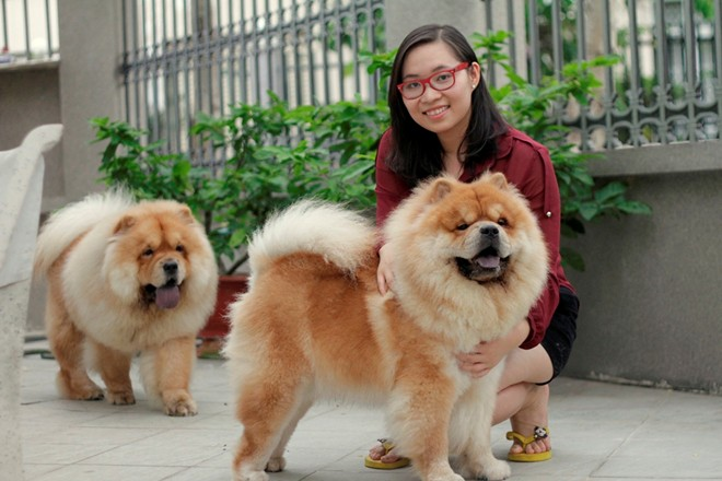 Cô gái Việt có trại chó giá ngàn đô/con - 10