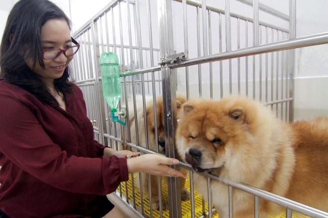 Cô gái Việt có trại chó giá ngàn đô/con - 8