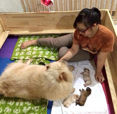 Cô gái Việt có trại chó giá ngàn đô/con - 9