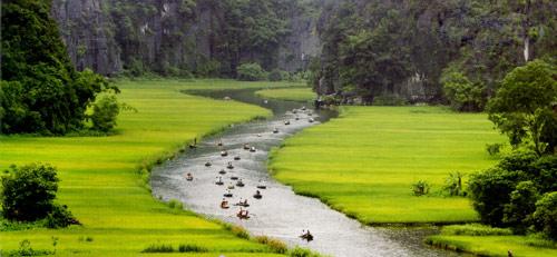 Về Tam Cốc ngắm vẻ đẹp của bông lúa Việt - 1