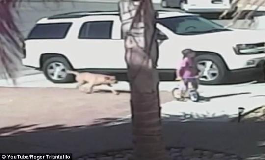 Mèo đánh chó cứu cậu chủ nhỏ - 2