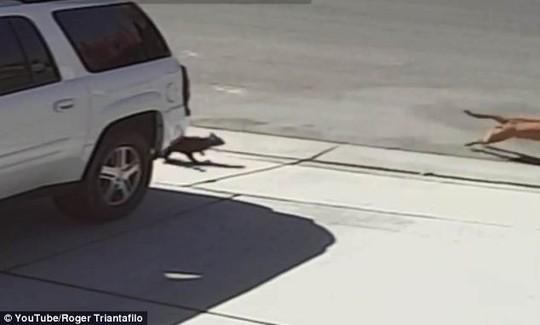 Mèo đánh chó cứu cậu chủ nhỏ - 6