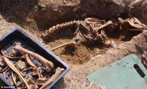 Phát hiện hóa thạch xương chó ngao ma huyền thoại - 1
