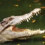 Tin tức trong ngày - Đi câu cá, bé trai 11 tuổi bị cá sấu nuốt chửng