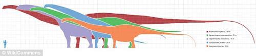 Phát hiện hóa thạch khủng long cao bằng tòa nhà 7 tầng - 8
