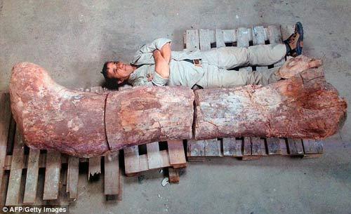 Phát hiện hóa thạch khủng long cao bằng tòa nhà 7 tầng - 1