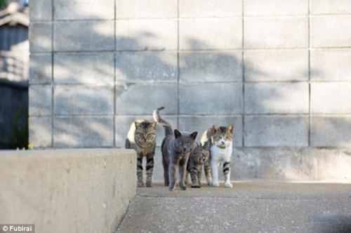 """Đến thăm """"vương quốc mèo"""" ở Nhật Bản - 5"""