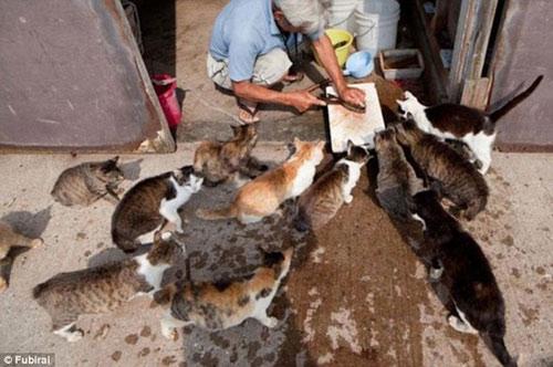 """Đến thăm """"vương quốc mèo"""" ở Nhật Bản - 6"""