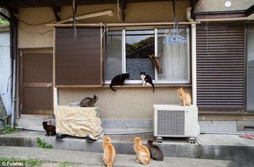 """Đến thăm """"vương quốc mèo"""" ở Nhật Bản - 14"""