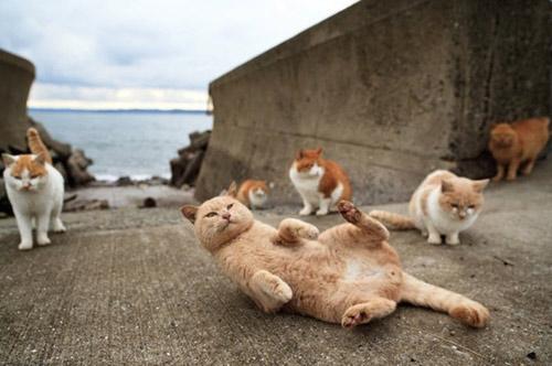 """Đến thăm """"vương quốc mèo"""" ở Nhật Bản - 12"""