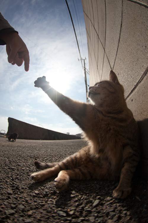 """Đến thăm """"vương quốc mèo"""" ở Nhật Bản - 13"""