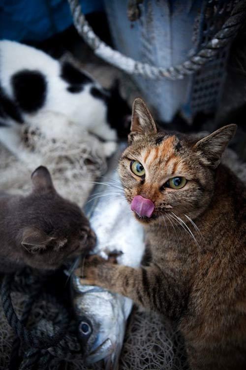 """Đến thăm """"vương quốc mèo"""" ở Nhật Bản - 9"""