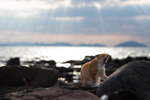"""Đến thăm """"vương quốc mèo"""" ở Nhật Bản - 10"""