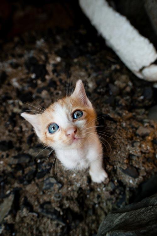 """Đến thăm """"vương quốc mèo"""" ở Nhật Bản - 11"""