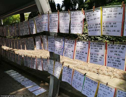 Trung Quốc: Phụ huynh xếp hàng tìm vợ, chồng cho con - 2