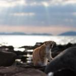 """Du lịch - Đến thăm """"vương quốc mèo"""" ở Nhật Bản"""