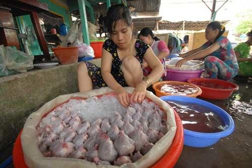 Đi chợ chuột lớn nhất miền Tây - 13