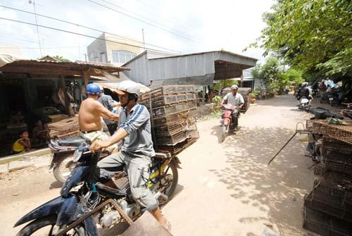 Đi chợ chuột lớn nhất miền Tây - 4