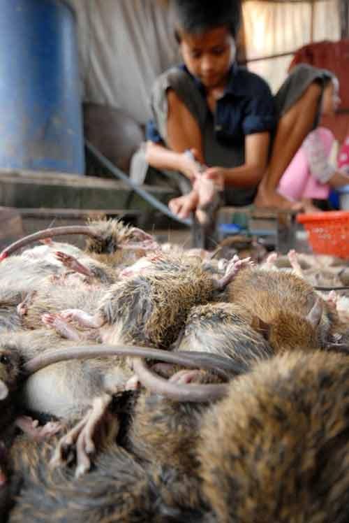 Đi chợ chuột lớn nhất miền Tây - 8