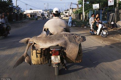 """Nhiếp ảnh gia """"Tây"""" ngỡ ngàng với xe máy ở Việt Nam - 9"""
