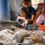 Thị trường - Tiêu dùng - Đi chợ chuột lớn nhất miền Tây
