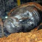 Phi thường - kỳ quặc - Bí ẩn 2 xác ướp nổi tiếng thời hậu Lê Việt Nam
