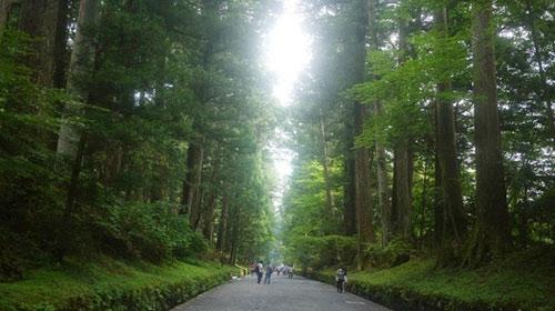 Đại lộ cây tuyết tùng dài nhất thế giới ở Nhật Bản - 1