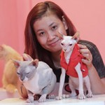 Bạn trẻ - Cuộc sống - Nữ sinh 9X bỏ trăm triệu nuôi mèo không lông