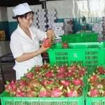 Thị trường - Tiêu dùng - Giảm xuất khẩu sang Trung Quốc để bớt lệ thuộc