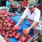 Thị trường - Tiêu dùng - Trái cây dội chợ, rớt giá hàng loạt