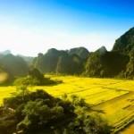 Du lịch - Tam Cốc – Bích Động đẹp mê hồn trong mùa lúa chín