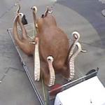 """Phi thường - kỳ quặc - Bạch tuộc khổng lồ """"dạo phố"""""""