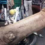 Tin tức trong ngày - Bình Định: Cây xanh bật gốc đè 3 người nguy kịch