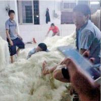 """Hãi hùng bún gạo """"bàn chân thối"""" ở Trung Quốc"""