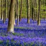 Du lịch - Lạc giữa khu rừng cổ tích đẹp mê hồn ở Bỉ