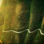 Du lịch - 5 đường đèo đẹp nhưng nguy hiểm ở Việt Nam