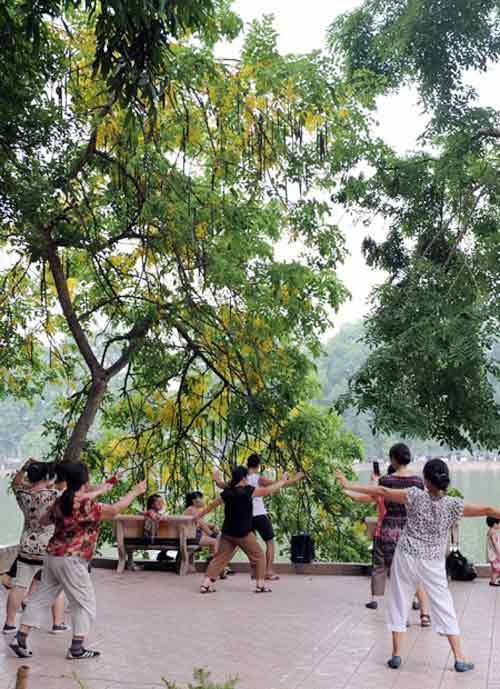 Hoa Muồng Hoàng Yến rực rỡ đường phố Hà Nội - 3