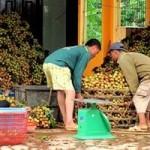 Thị trường - Tiêu dùng - Trái cây Việt thoát cảnh giá bèo