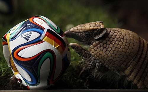 """Loạn """"nhà tiên tri"""" động vật dự đoán World Cup 2014 - 3"""