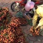 Thị trường - Tiêu dùng - Bán 1 kg vải chỉ mua đủ mớ rau muống