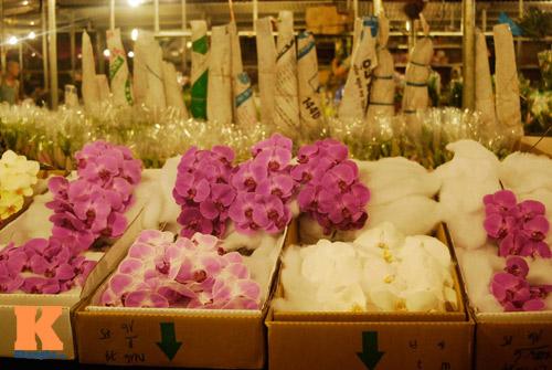 Lung linh sắc hoa chợ đêm Quảng Bá - 1