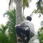 Tin tức trong ngày - Hái dừa trong đêm, 2 thanh niên bị điện giật chết