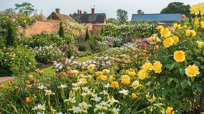 2. Khu vườn hoa hồng David Austin nằm ở quận Shropshire thuộc vùng West Midlands (Anh).