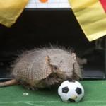 Ảnh đẹp: Tutu trổ tài dự đoán World Cup
